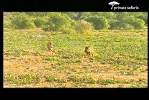 Private Safaris Video / Born to be wild