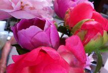 les fleurs / by nikki