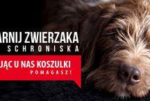 2015 F.F. w kampanii PRZYGARNIJ ZWIERZAKA / W ramach tej kampanii można kupić koszulki i dzięki temu pomóc podopiecznym Fundacji Felineus. Zysk z każdej sprzedanej koszulki bądź torby, 20 zł brutto, zasili konto Fundacji i będzie przeznaczony na koszta związane z przygotowaniem zwierząt do adopcji (np. odrobaczenie, odpchlenie, szczepienie). Szerzymy także  ideę adopcji zwierząt.  nadrukomat.com/przygarnij-zwierzaka-felineus1.html nadrukomat.com/przygarnij-zwierzaka-kotek-felineus1.html