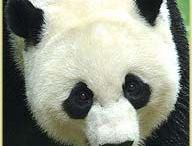 Panda's / by Debbie Kenney Thomas