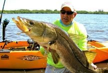 Snook Fishing Florida / This is a board for snook fishing adventures we have been a part of!