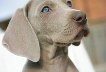 Pets ❤️