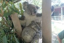 Hunter Valley and Wildlife Park Tour / Take an animated trip through the Walkabout Wildlife Park, first stop on your way to the Hunter Valley