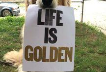 Savanna my golden♡