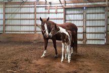 Begin Again Horse Rescue Fundraiser