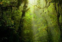 vegetal inspiration / plants, herbal, trees, forest , jungle, bush, botanical, trees