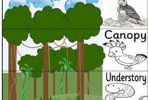 Rainforests / Grade 2 Social Studies
