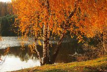 "Осень,""рыжая лисица""..."