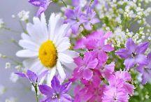 полевые цветы / by Anna Faizulova