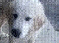 Disgusted Doggo