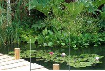 Vandplanter i haven