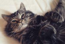 cica / cats,cats, cute cats...