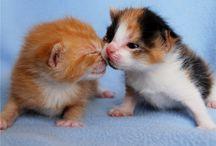 Cute animals!!!