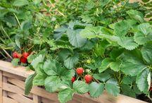 Pestovanie v zahradke