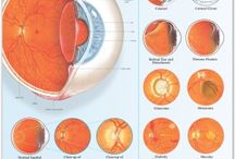 Our Amazing Eyes and  Disorders of The Eye