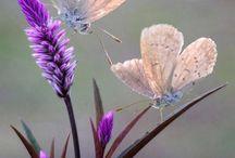 Flowers of the world /цветы мира