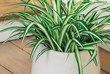 Plantes deco