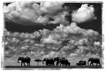 Photographe / Laurent Baheux
