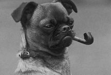 Dogs /  Belgian Griffon, Brussels Griffon, Small Brabant Griffon and all sorts of breeds. I don't like smoking though, especially not when dogs do...