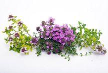 Здоровье, красота / Health, healing herbs