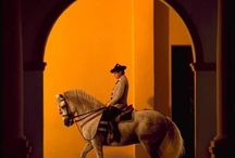 Andalusian Absolutely / A collection of the best Andalusian horses