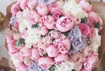 flower /plants