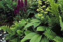 Garden - shade