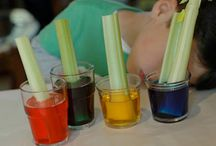 Cool Science Experiments for Kids / Science fun for kids