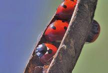 Insekte