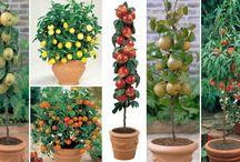plantas frutiferas em vaso