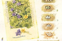 ботаника картинки