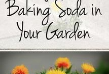 Baking soda for the garden
