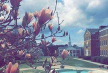 Campus View / by Wesleyan College