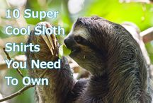 Sloth Blog Posts / Our favorite blog posts from All Things Sloth!