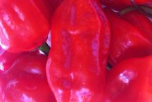 Favorite Peppers - Mild to Insanely HOT!!