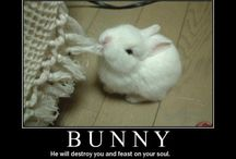 Funny Rabbit Pictures and Cartoons