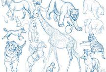Animals Sketches