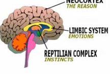 Bases neuropsicológicas