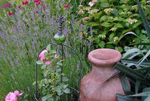 Garden / Minden ami kert...