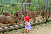 Bushland, Sanctuaries Reserves