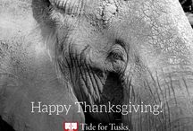 Tide for Tusks Thanksgiving / Happy Thanksgiving from Tide for Tusks