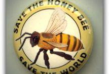 Honey & bees
