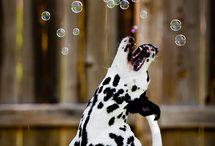 Happy Dogs / HAPPY!