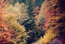 -Beautiful Nature-
