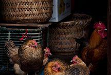 Høns's
