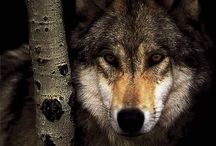 my totem animal | the wolf