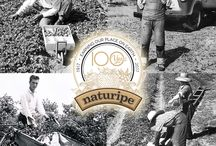 "100 Years of Naturipe / For over 100 years, our family of growers has been dedicated to growing premium quality berries the ""Naturipe Way"". During our centennial year we honor the heritage of our generations of family farms and the tenacity, passion, and integrity that goes into producing every vibrant, delicious berry. #100YearsofNaturipe Learn more at: www.naturipefarms.com/100years"