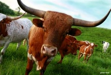 Longhorns / by Mary Dodgen Craig