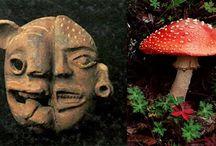 Mushrooms / by Aivar Ruukel