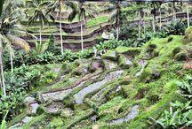 Bali - wyspa taka